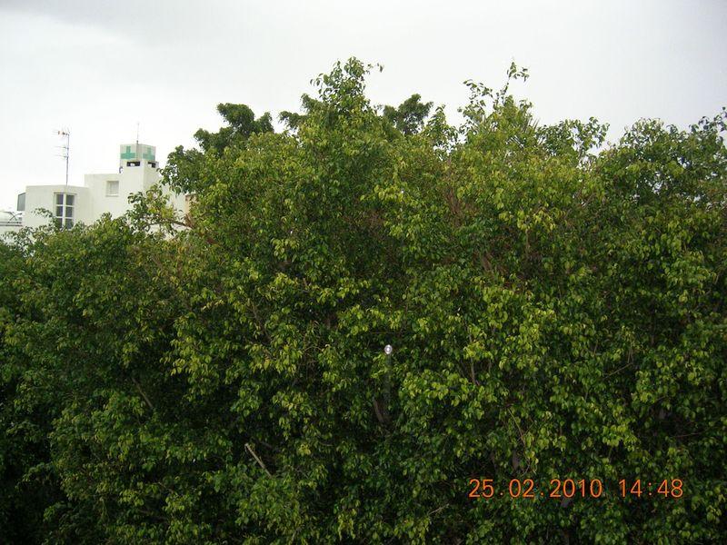 DSCN5766