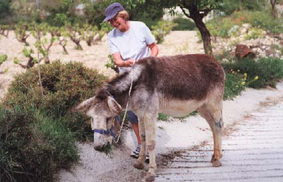 Donkeys_in_cyprus