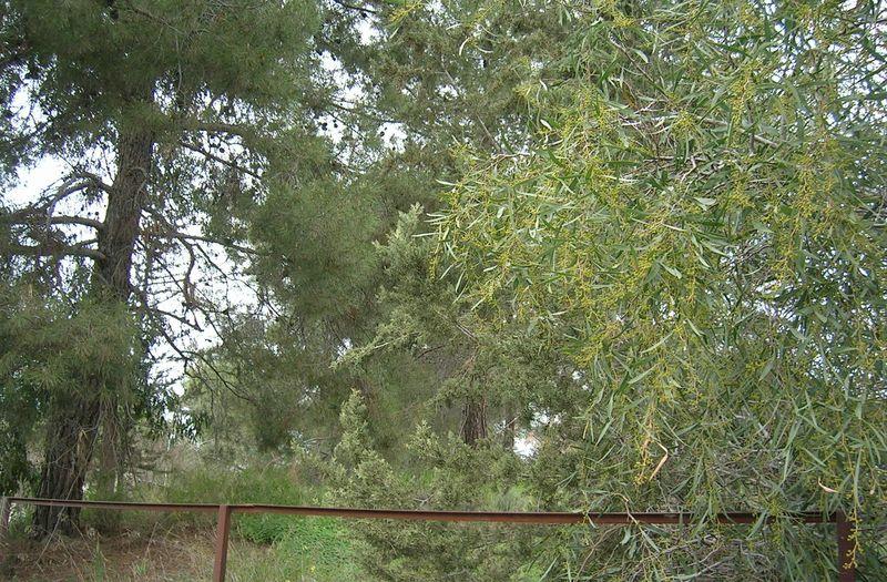 mosfiloti-larnaca