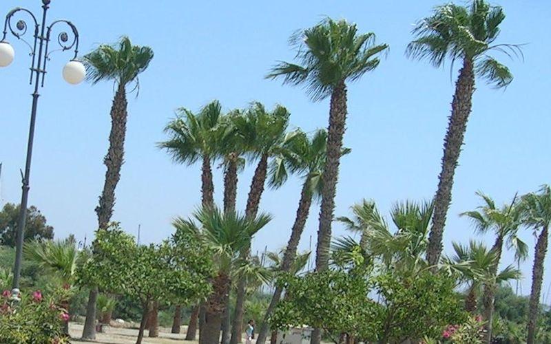 Finicoudes2_Promenade_Larnaca2005