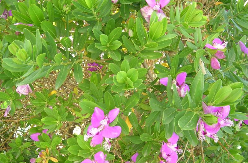 Spring-flowers (2)